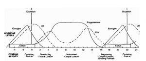 Figure 2. Hormone levels and corresponding ovarian activity in the estrous period.