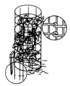 Figure 5. Cages made from reinforcing wire give good support to tomato plants.