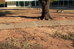 Figure 1. Turfgrasses can be difficult to grow in heavily shaded areas due to poor light quality and quantity, traffic, compaction and competition with trees.