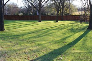 Figure 2. Shade-tolerant turfgrasses can be successfully grown in partial shade when proper management practices are applied.