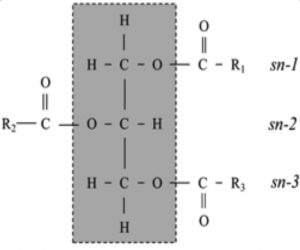 Figure 2: Schematic of a triacylglyceride molecule structure. R1, R2, and R3 indicating the fatty acid and the sn-1, -2 and -3 positions