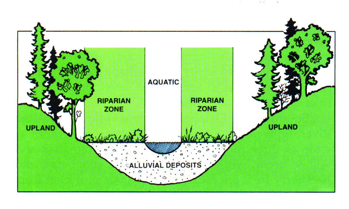 Forest Stream Diagram Auto Electrical Wiring Diagram