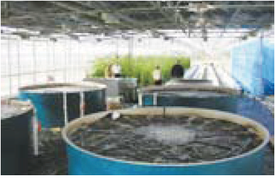 Srac 454 Recirculating Aquaculture Tank Production Systems
