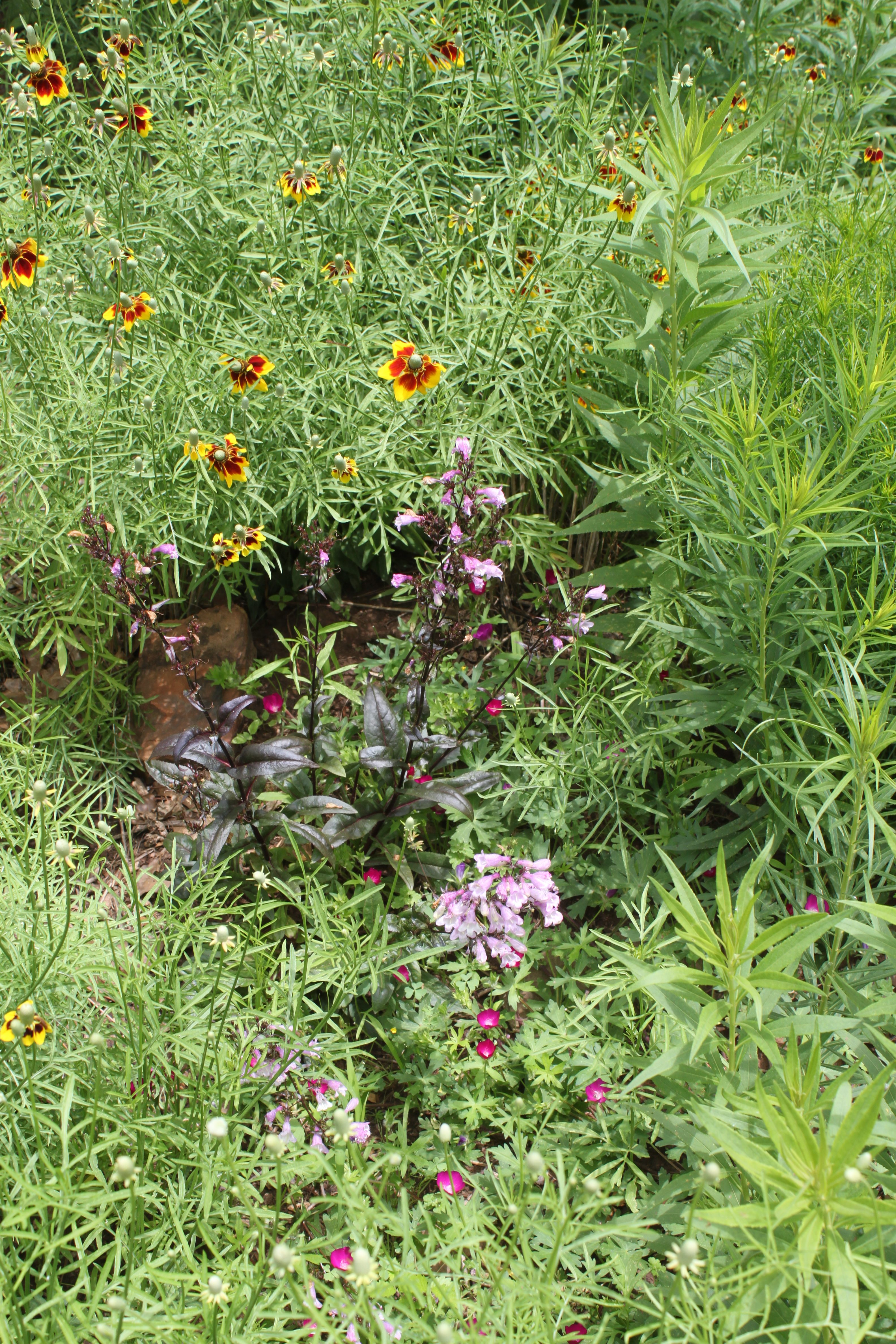 if you have designed or planted a traditional garden before it will not be difficult to design and build a rain garden keep in mind that there are - Rain Garden Design