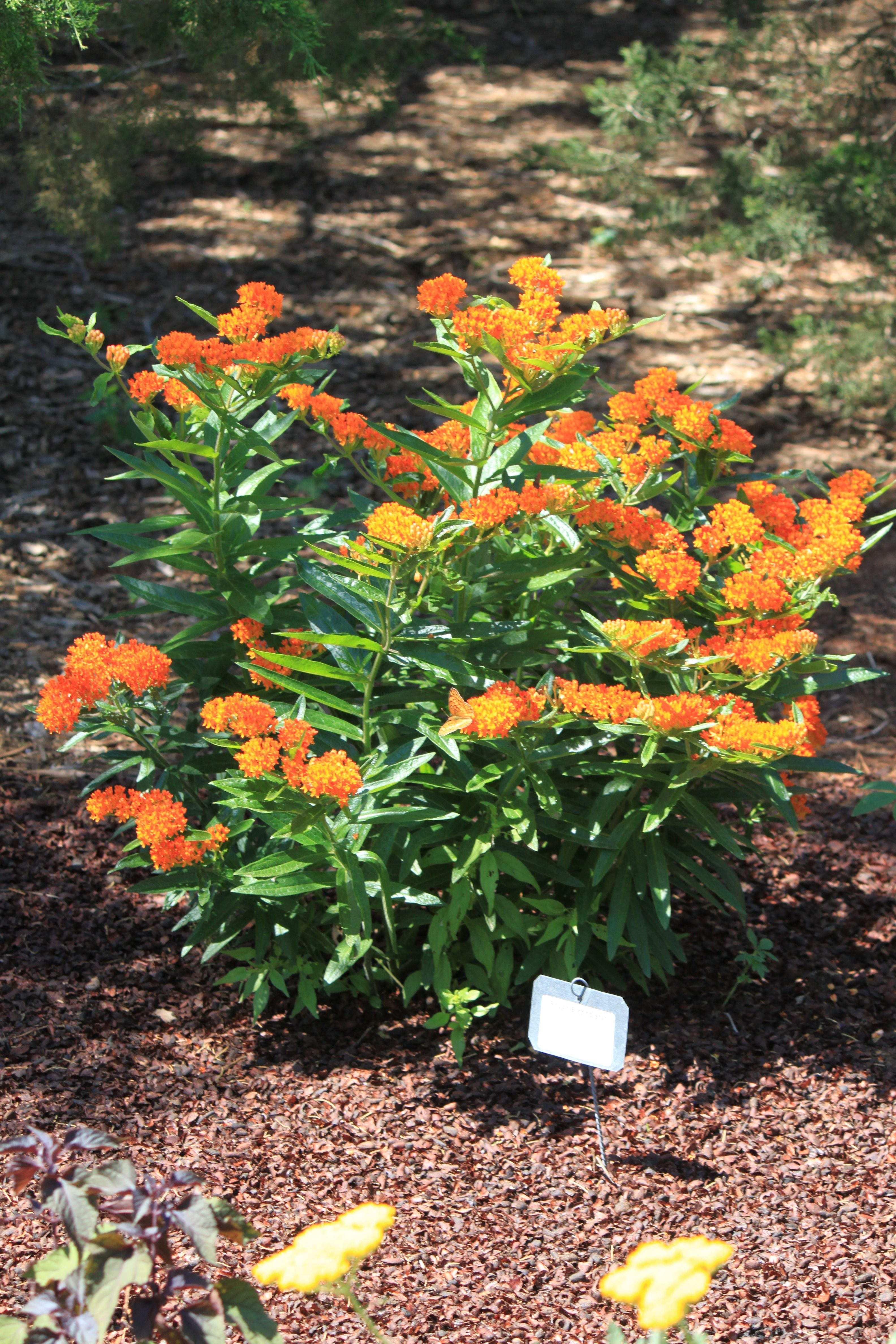 Green Orange Small Apartment Living Room Decor: E-1052 Oklahoma Proven: Plant Selections For Oklahoma